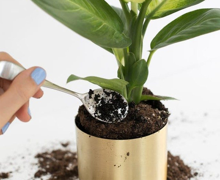 Кофе как удобрение применение подкормки для растений и цветов в огороде